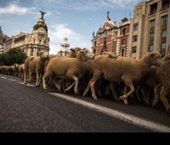 Прогон скота
